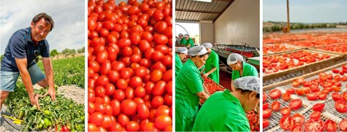 Herstellung von getrockneten Tomaten - Siziliens Sonne