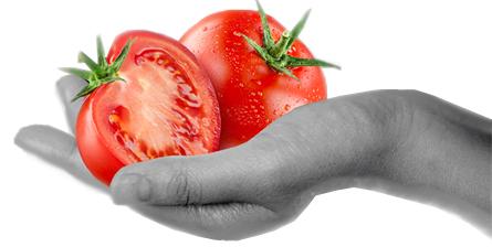 In der sonne Siziliens Getrocknete Tomaten BIO