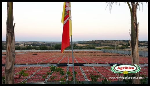 Siziliens Sonne - panorama getrocknete tomaten sizilien