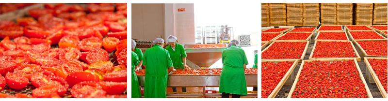 getrockneten Tomaten Die Verarbeitung